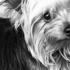 Three Life Lessons of a Lost Dog