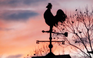2015-06-04-rooster-morning